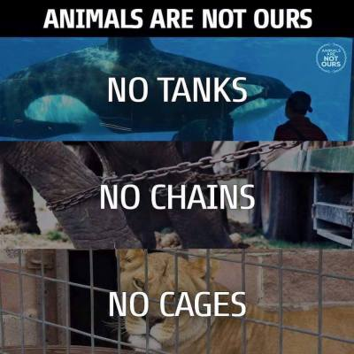 Animal Freedom Fighter - no tanks no chains no cages