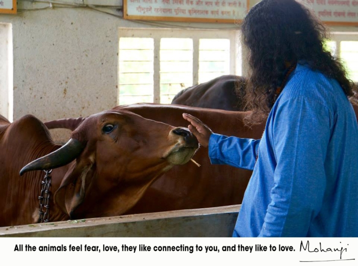 Mohanji quote - All the animals like to love
